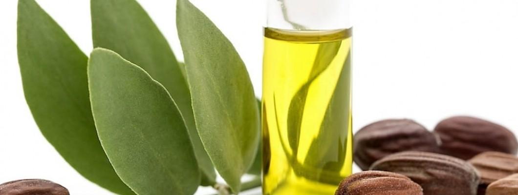 Jojoba oil: an oasis in the desert